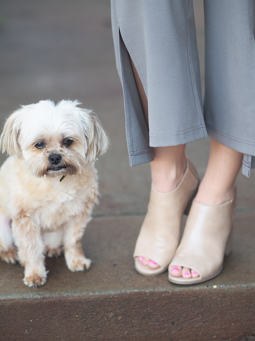 Shorkie and shoes